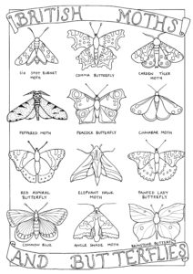 A colouring in page showing British moths and butterflies